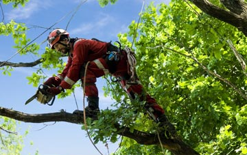 find trusted rated Armagh tree surgeons