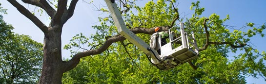 Armagh tree surgery services