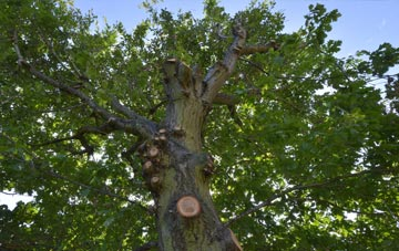 what is Armagh tree surgery?